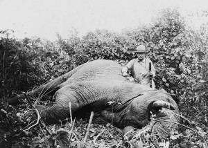 Theodore Roosevelt and elephant on African safari